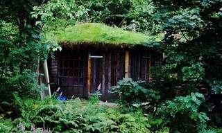 Casas Com Telhados De Grama