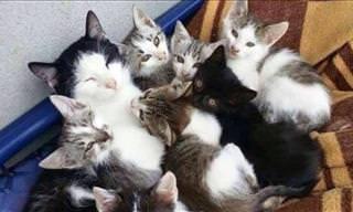 A importância da família no reino animal