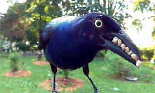 Fotos Lindas de Pássaros