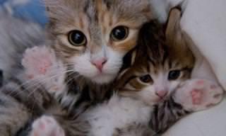 Esses Gatos e Suas Miniaturas Levam Fofura Muito a Sério!