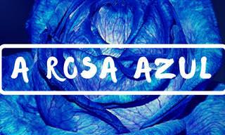 A Rosa Azul: Uma Linda História de Respeito