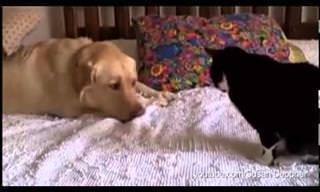 Quando cães querem insistir na amizade dos felinos...