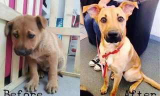 Cães Antes e Depois da Adoção