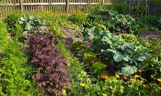 15 Incríveis Dicas Para Plantar Vegetais no Jardim