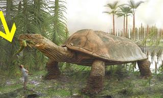 Criaturas assombrosas que viveram há milhões de anos!
