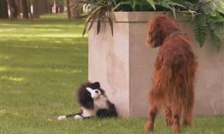 Esses Cães Caíram na Pegadinha do Osso!