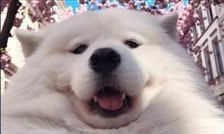 19 Fotos de Cães Sendo... Cães!