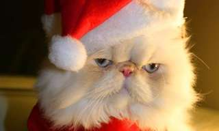 Os Bichos Também Gostam do Natal!