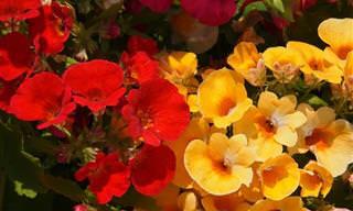As Mais Lindas Flores de Outono Para Você Cultivar