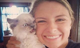 Gatos Que Não Gostam Nem um Pouco de Selfies...