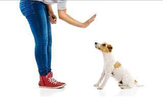 GUIA: Como Evitar o Ataque de um Cão