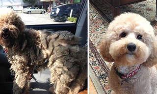 A Espantosa Transformação de Cães Resgatados