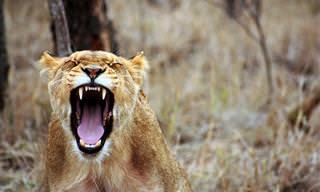 Faça o nosso teste para descobrir se sabe tudo sobre o reino animal!