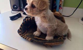 Uma Vida de Cachorro Muito Boa!