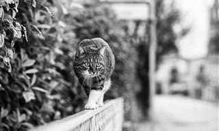Adoráveis Gatos Moontrilho