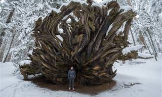 Raras maravilhas da natureza em 15 imagens