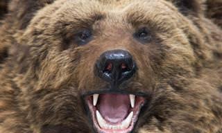 Piada: Aviso aos caçadores e amantes de trilhas florestais
