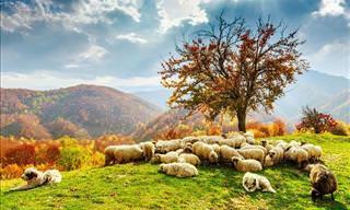 A Diversão dos Animais no Outono