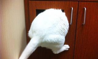 Estes Gatos Não Sabem Onde Se Esconder Veterinário!