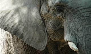 8 Estereótipos sobre animais e a verdade sobre eles