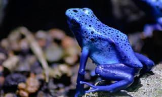 A Bela e Perfeita Natureza em Azul