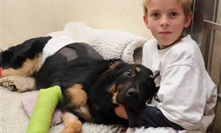 14 Cães Que Foram Verdadeiros Heróis