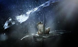 Animais Se Protegem Da Chuva Com Guardas-Chuvas Naturais!