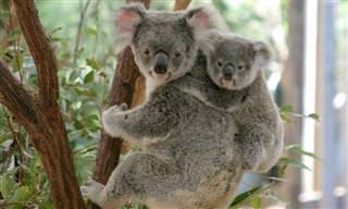 Conheça Animais Que Só Podem Ser Vistos Na Austrália!