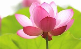 Lindas Fotos de Flores Aquáticas