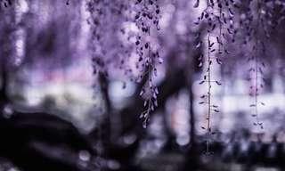 A Natureza Etérea de Hidenobu Suzuki
