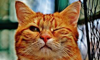 Essa Piada Começa Com Um Gato Muito Inteligente...