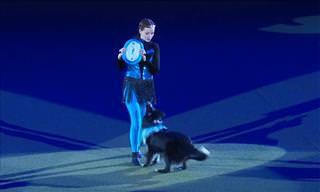 Veja Por Que O Cão Border Collie É Uma Raça Tão Especial