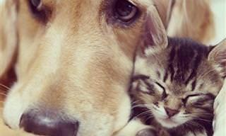 A Linda Amizade Entre a Gatinha Ichimi e o Cão Ponzu