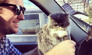 Gatos São os Melhores Amigos do Homem!