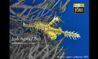 Um mergulho relaxante nas águas de Bali