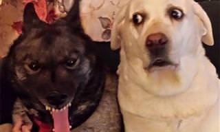 15 Cães Hilários Que Vão Te Fazer Dar Muitas Gargalhadas!