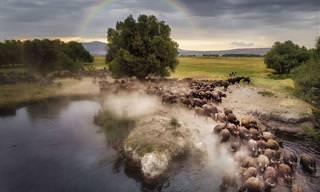 Fotos feitas com drones: visão surreal do nosso mundo