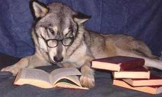 Silêncio, Por Favor. Estamos Estudando!