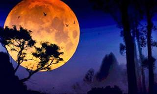 Confira o Fascínio e a Beleza da Lua Cheia!
