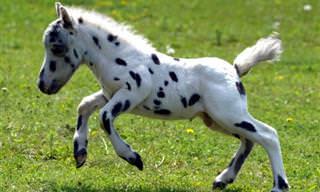 Momento de Ternura: Os Cavalos Também Podem Ser Fofos!