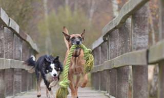 12 Sinais de Que Seu Cão É Especial