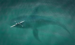 25 Criaturas Impressionantes Que Moram Nos Mares