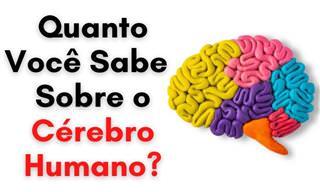 Teste: Você conhece bem o cérebro humano?