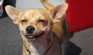 17 Animais sorridentes para alegrar seu dia