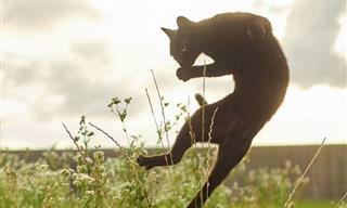 Fotos Hilárias e Adoráveis de Gatos Ninja