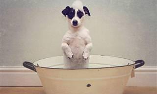 Animais Adoráveis Na Hora do Banho!