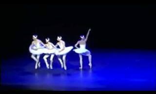 Os quatro cisnes do laguinho