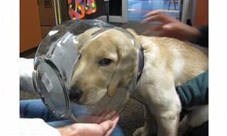 Cachorros Confusos, Presos em Lugares Estranhos