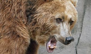 Piada do Dia: Dois Rapazes e Um Urso
