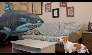 O Cão e o Tubarão - Duelo de Titãs!!